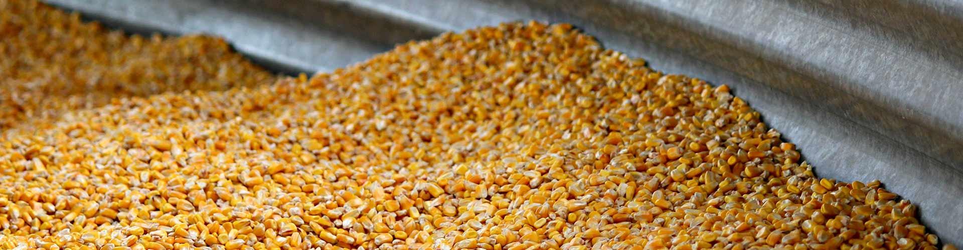 Como evitar imprevistos em silos de grãos